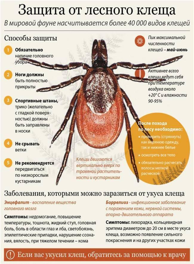 Как проявляется и чем опасен для человека укус клеща