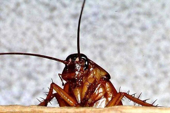 К чему снятся тараканы: толкование снов