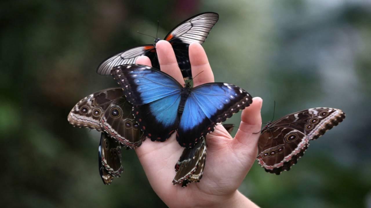 Бабочка-сова — описание, среда обитания, интересные факты