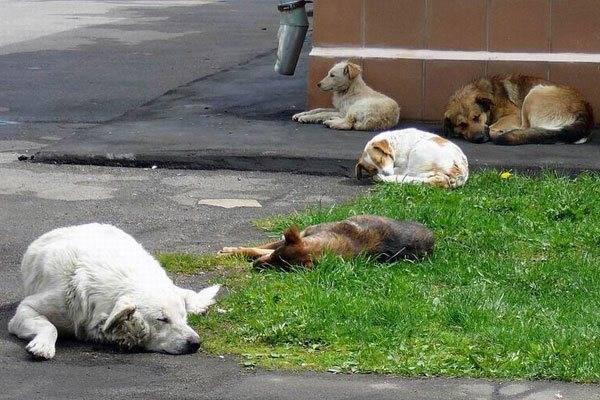 Собачья блоха: как избавиться? сколько живут блохи без животного и могут ли они жить на человеке методы борьбы с собачьими блохами