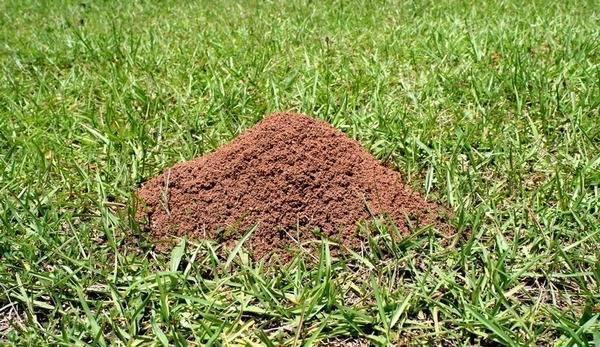 Как устроен муравейник: внутреннее строение, жизнь и взаимодействие муравьев