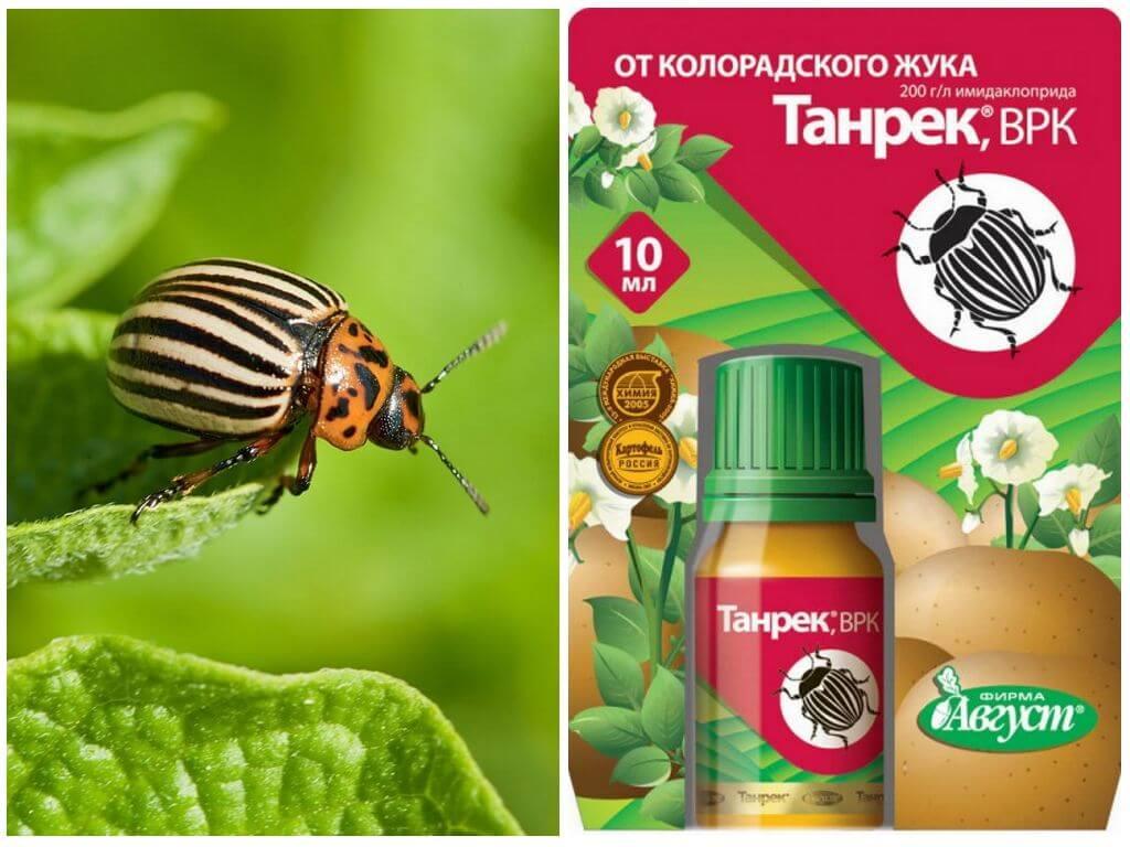 Инструкция по применению препарата палач против колорадского жука, отзывы