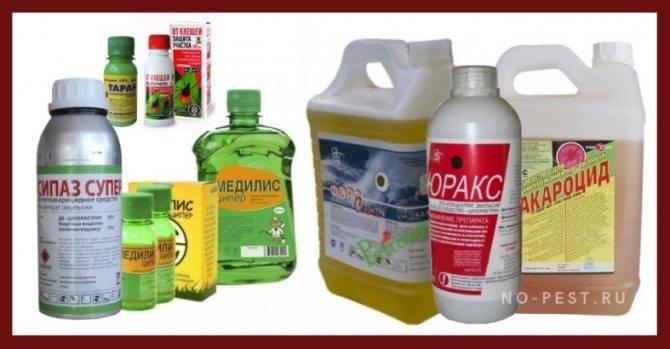 Эффективные способы защиты от клещей в лесу на природе, в быту и на дачном участке. химические и механические методы борьбы с паразитами