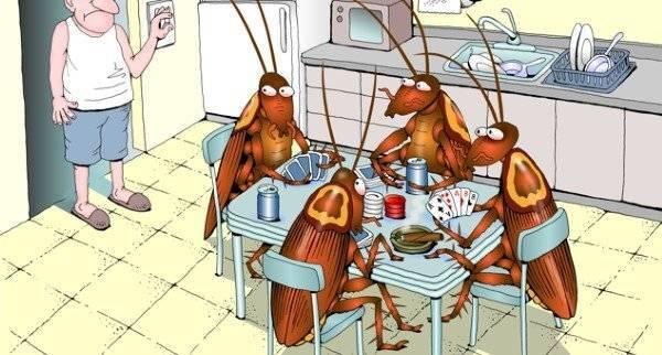 Интересное о тараканах — какие они бывают