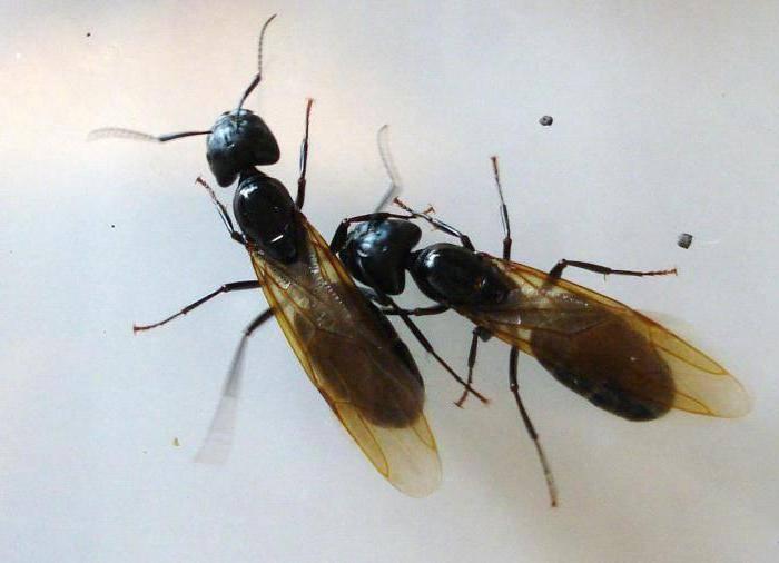 Сонник муравьи в квартире приснился к чему снится муравьи в квартире во сне видеть