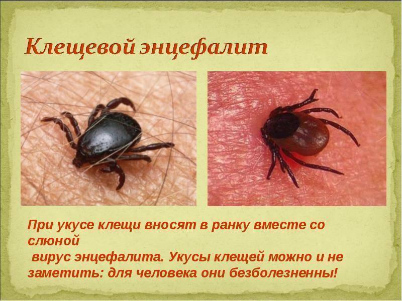 Укусы насекомых: алгоритм первой помощи, характерные признаки