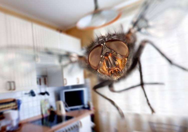 Как избавиться от мух в доме или квартире: способы избавления от насекомых быстро и просто (120 фото)