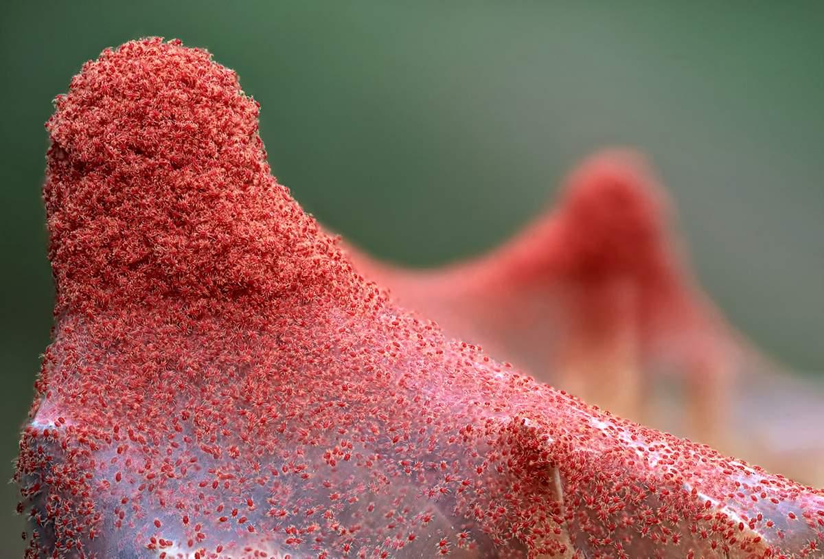 Паутинный клещ на растениях: причины появления, методы борьбы и профилактика