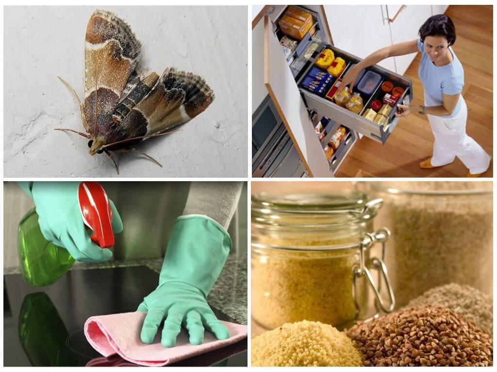 Как избавиться от пищевой моли в квартире?