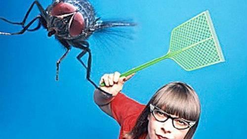 Сонник – видеть во сне мух. к чему снятся мухи жужжат, большие, черные, золотые, убитые, в комнате, в доме, роятся, на стекле, в паутине, в еде, женщине: толкование сна