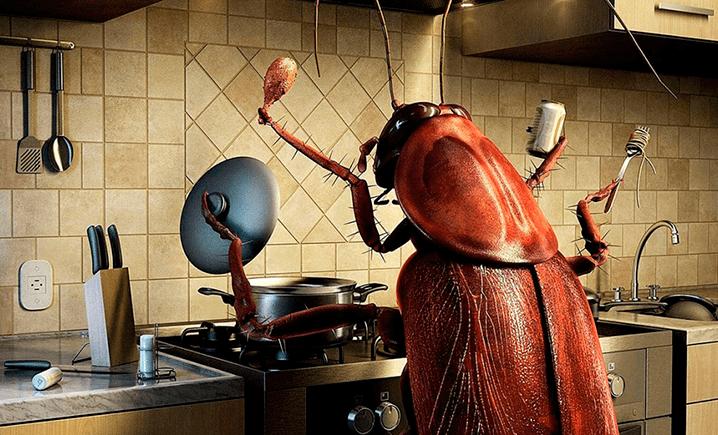 Лучшие методы дезинсекции против вездесущих тараканов