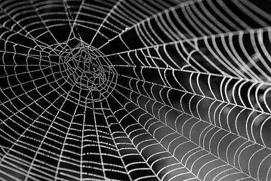 Толкование сонников: к чему снится паутина