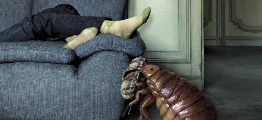 Мебельные клопы и методы борьбы с ними