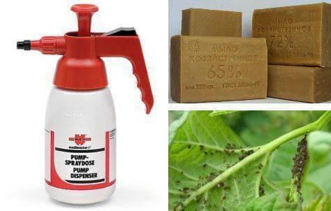 Горчица в огороде: как применять от вредителей