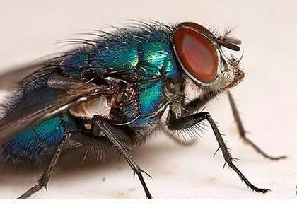 Приснились мухи — толкование сна по соннику