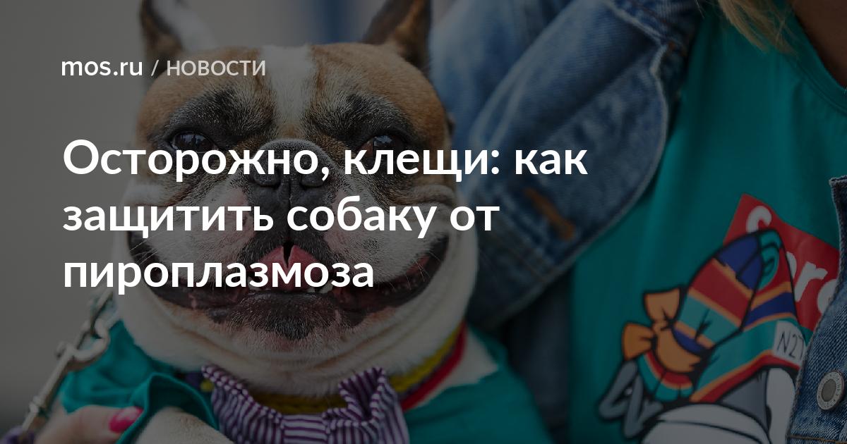 Вакцинация собак против клещей