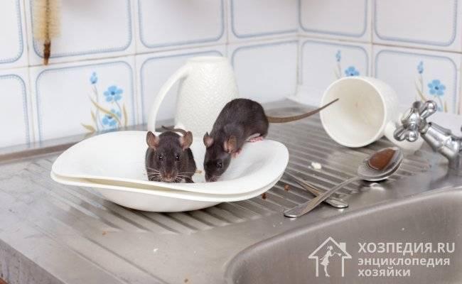 Как навсегда избавиться от мышей на чердаке