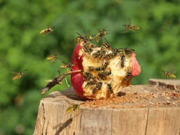 Как сделать ловушку для мух и ос, ловушка для ящерицы