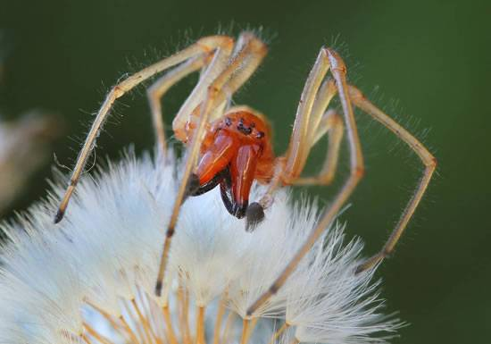 Самые опасные пауки в мире: топ — 7