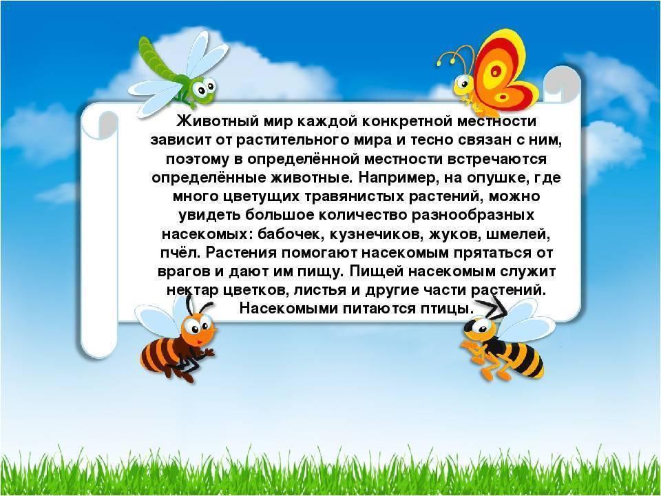 Бабочки крапивница адмирал