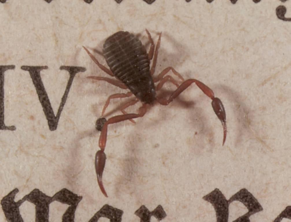 Клещи-краснотелки – кровососущие паразиты, фото, описание, есть ли польза от насекомого или больше вреда? как избавиться от красной напасти?
