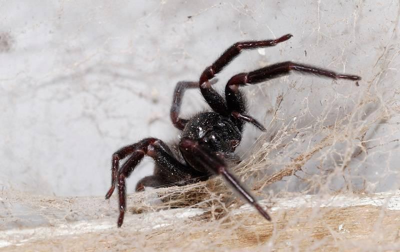 Самые страшные пауки – вся правда об арахнидах. гигантские пауки. самый большой паук в мире