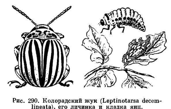 Самая большая бабочка в мире. луговой мотылек – бабочка невзрачной наружности с огромным вредоносным потенциалом