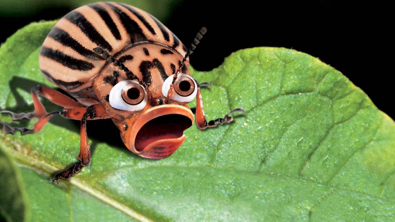 ?регент» от колорадского жука — подробная инструкция по применению