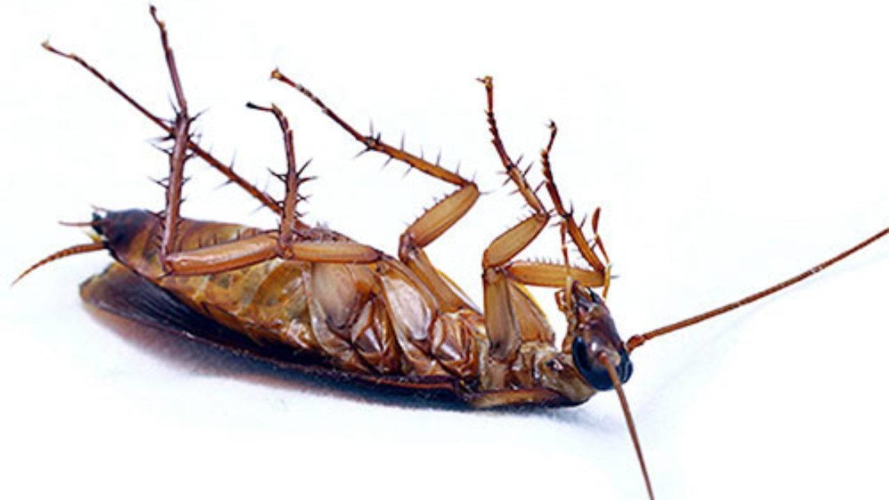 Обзор средства барон от тараканов