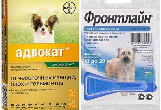 Выводим блох у собак эффективными средствами: достоинства и недостатки