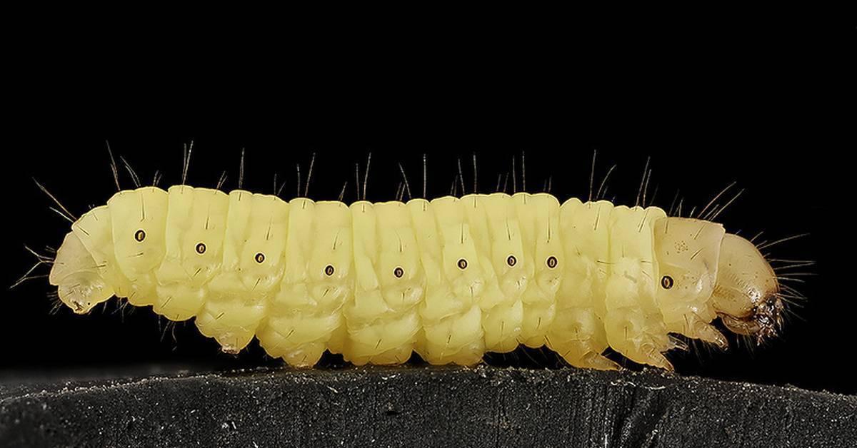 Как выглядит гнездо. как устроено гнездо осы, и каким образом оно используется в медицине? где искать осиное гнездо