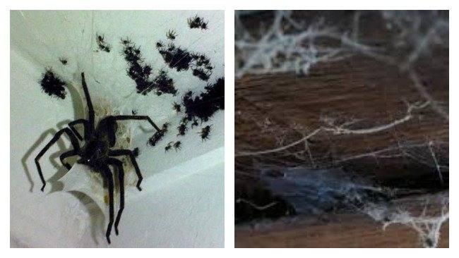 Когда от паука спасенья нет