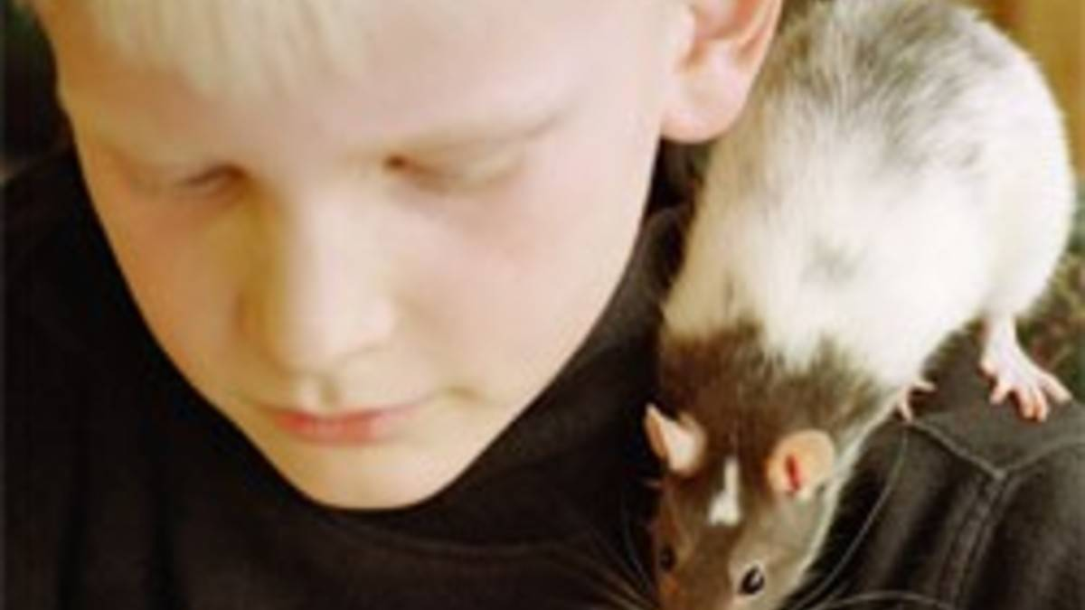 Как избавиться от крыс в сарае?