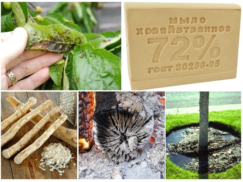Как бороться с тлей на садовом участке и в огороде народными средствами