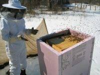 Особенности содержания пчёл зимой: подготовка