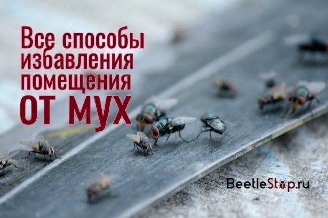 Как избавиться от мух в загородном доме, квартире и офисе