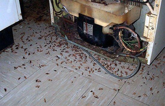 Нашатырный спирт от тараканов: отзывы
