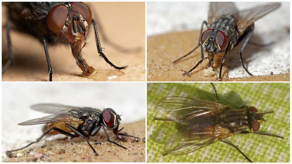 Почему муха не падает с потолка? как муха садится и держится на потолок опыт со стаканом
