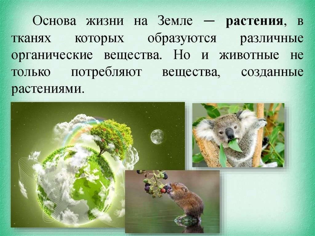 Кто питается клещами в природе