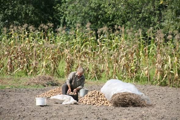 Методы борьбы с картофельной молью