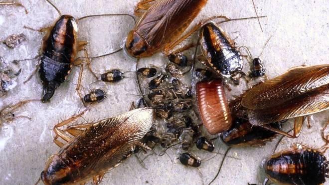 Если от соседей ползут тараканы: куда обращаться и жаловаться, что делать, как победить