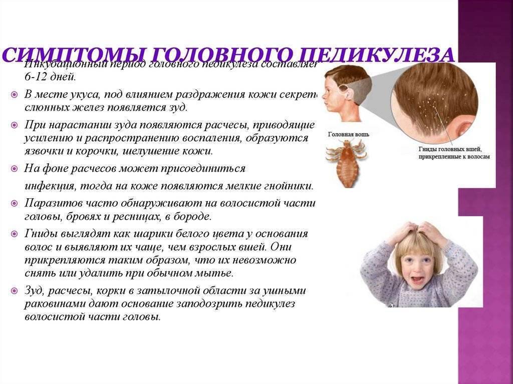 Какие заболевания вызывают разные виды вшей