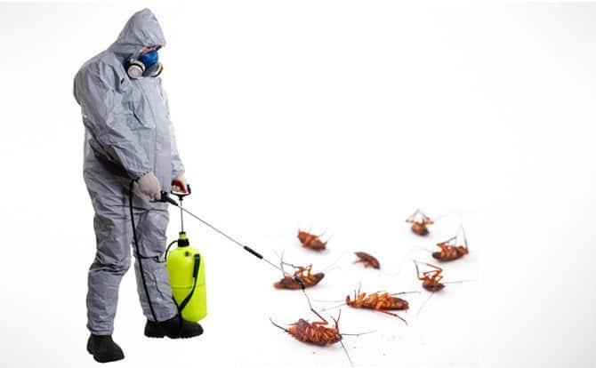 Инструкция по применению препарата регент от тараканов