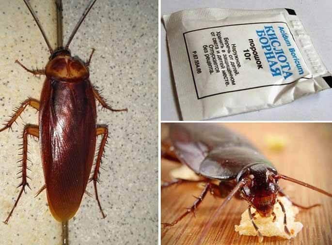 Как быстро избавиться от тараканов в доме — полезные советы