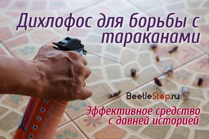 «Дихлофос» от тараканов: принцип действия и правила применения