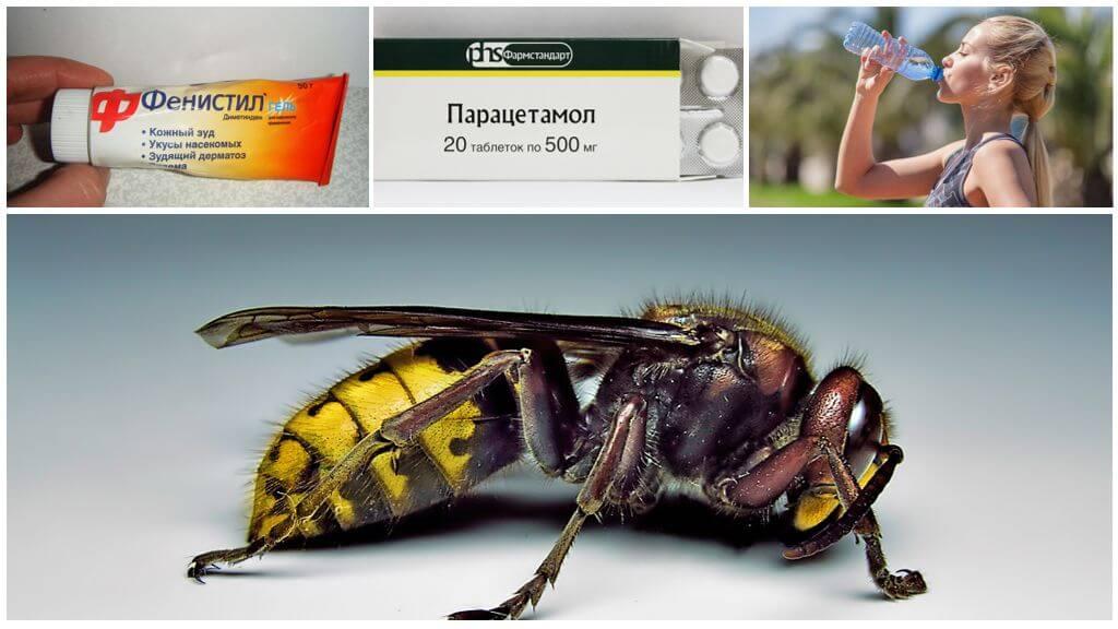 Укус шершня и его симптомы у человека