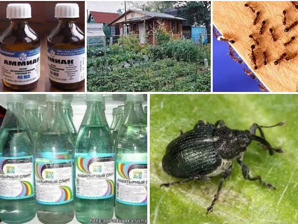 Нашатырь от комаров и мошек