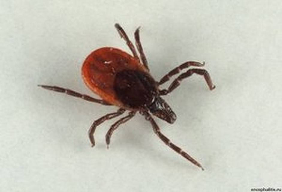 Костюмы биостоп – надежная защита от клещей и кровососущих насекомых