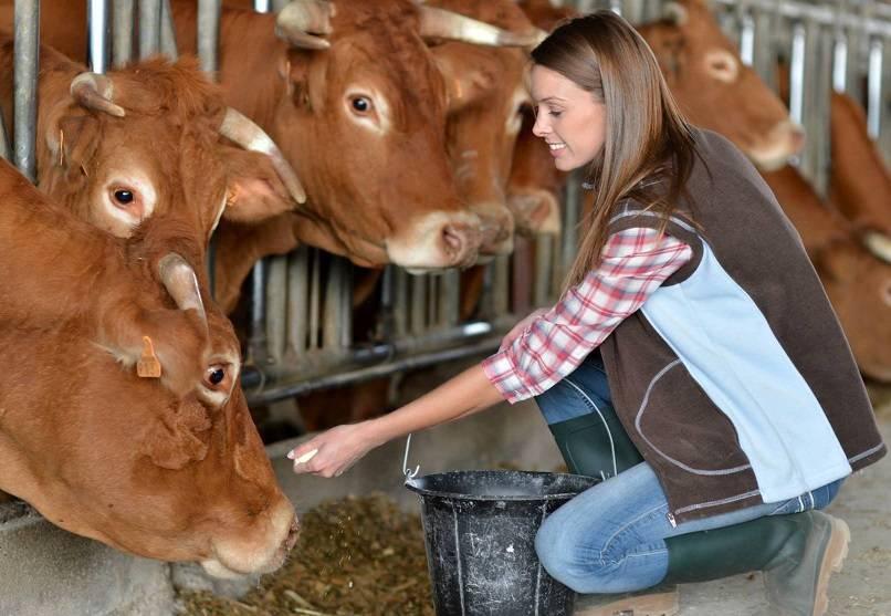 Выбираем средство от слепней для защиты животных и участка
