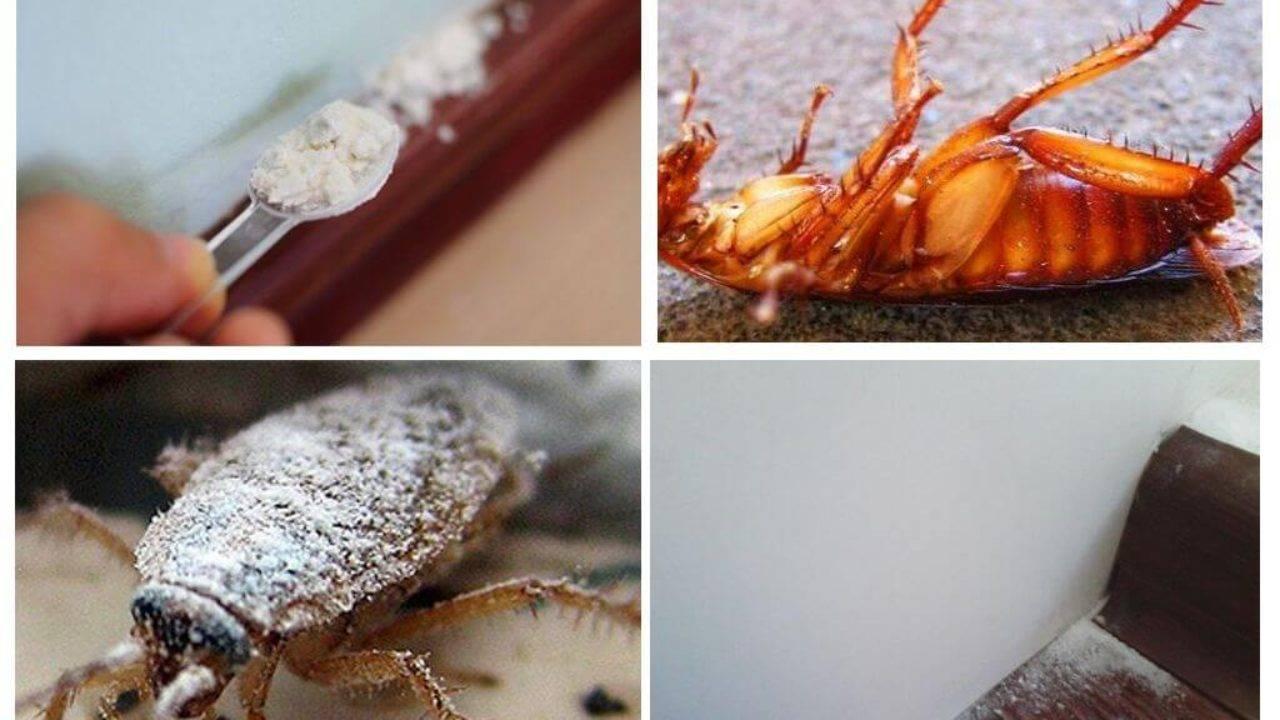 Борная кислота от тараканов – не оставляйте насекомым шанса